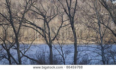 Leafless Elm and Sycamore Trees along a River Shoreline. Morning Light on Opposite Shore.
