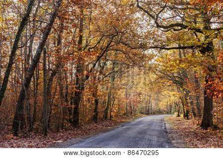 Oak forest with warm autumn tones in november