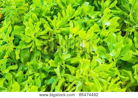 Background from green leaves