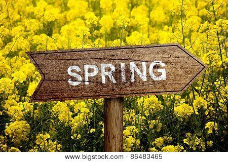Spring Roadsign