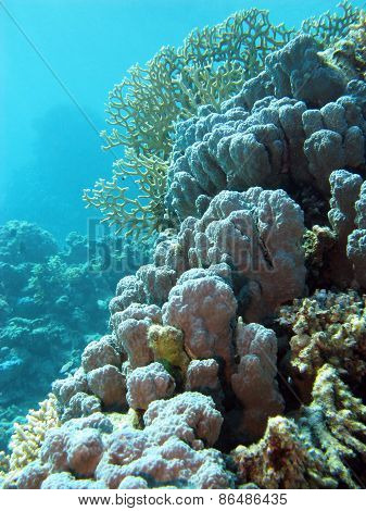 coral reef withe hard corals at the bottom of tropical sea