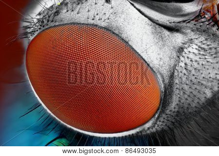 Extreme sharp and detailed fly compound eye surface at extreme magnification