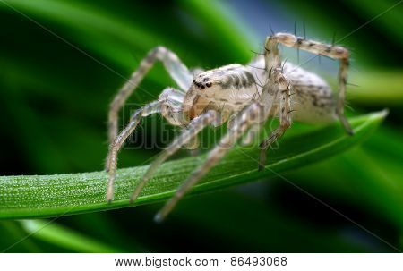 Closeup of spider in its natural environment