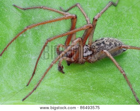 Extreme sharp and detailed photo of spider