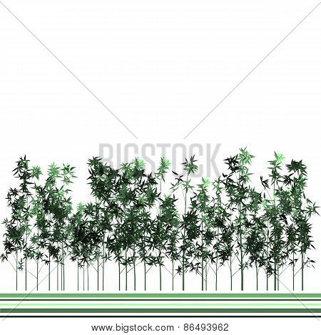 Bamboo Plants And Green Lines Background
