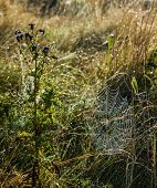 foto of grass area  - Spiders web in a grass area with morning dew on it.