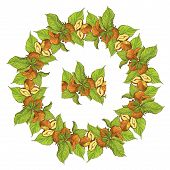 picture of hazelnut tree  - Circle ornament with highly detailed hand drawn hazelnuts isolated on white background - JPG