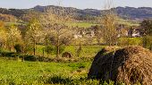 stock photo of hay bale  - Bales of hay in the background panorama village behind the trees - JPG