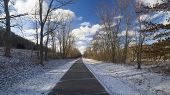 image of elm  - Paved Trail in Morning Light and Shadows lined with Pin Oak and Elm Trees. Dusting of snow. Blue sky with white clouds. 