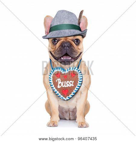 Bavarian German Dog