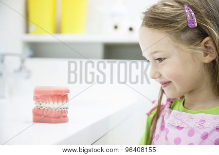 Little Girl Observing Model Of Human Jaw With Braces