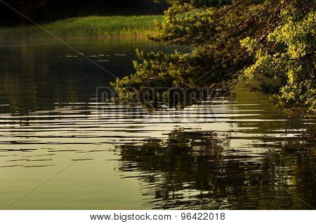 Tree mirroring in the see