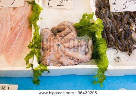 Octopus In Market