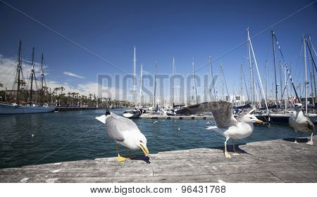 Close up on seagulls in the port