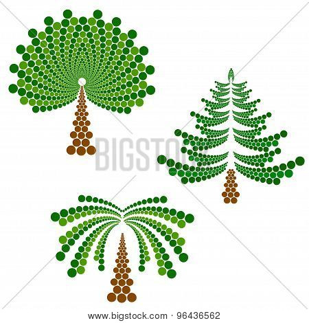 coniferous, deciduous tree and palm