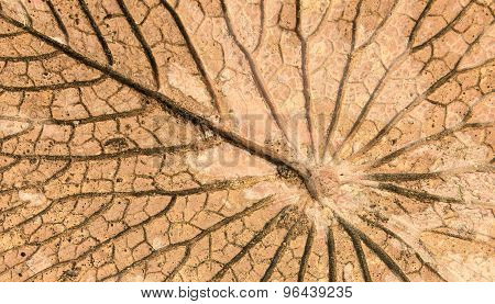 Background cement leaves motifs