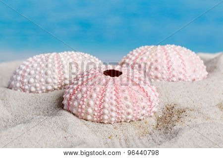 Fine detail of pink textured sea urchin skeletons