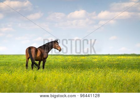 Horse in green pasture