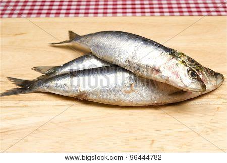 Cornish sardines