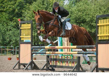 Jockey Jumps Over A Hurdle