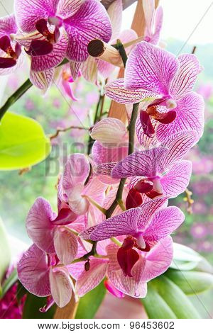 Purple Orchid Flowers Line.