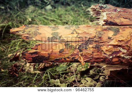 Tree bark.