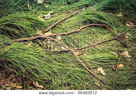 Branch and grass background.
