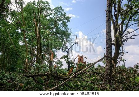 Damaged tree and electric pole.