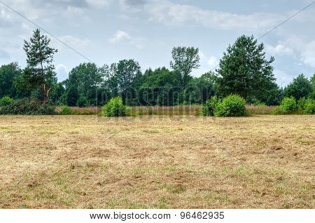 Summer countryside landscape.