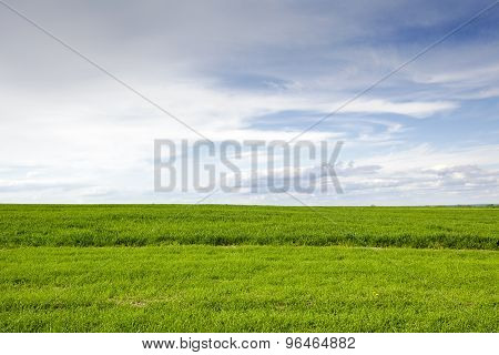 The Green Cultivated Field And Sky