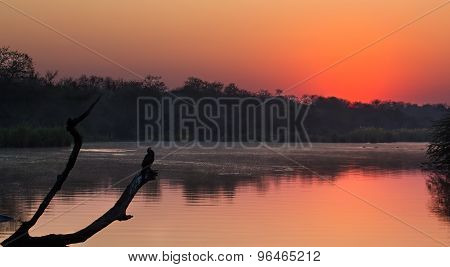African Darter Sitting On Tree Stump In Pond At Sunset