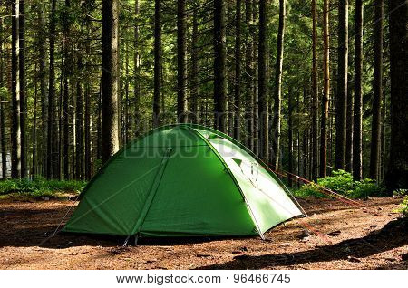 Tents In The Pine Forest