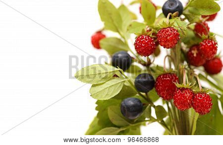 Strawberries and blueberries. bouquet berries , leaves of wild strawberry isolated on white backgrou
