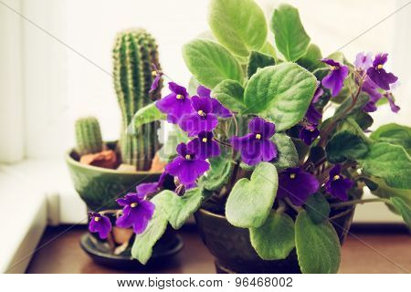 Potted African Violet And Cactus