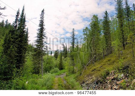 Forest landscape of the Sayan Mountains. Siberia. Khakassia.