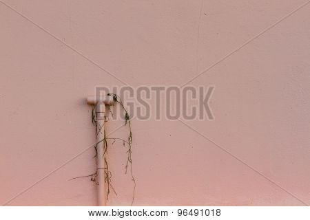 Pink Wall With Tube And Dry Plant