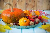 pic of ashes  - Autumn still life  - JPG