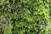 stock photo of chloroplast  - moss covered tree in the forest - JPG