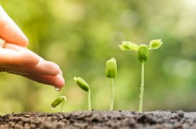 foto of germination  - hand nurturing and watering young baby plants growing in germination sequence on fertile soil with natural green background - JPG