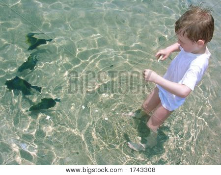 Boy Feed Fish Water