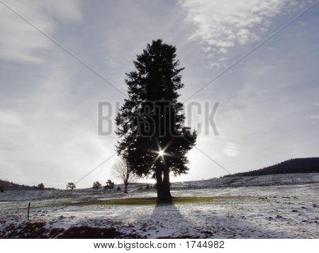 Solitary Tree In Landersen, France In Winter