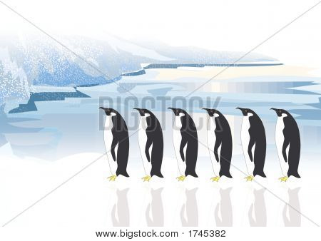 Penguins 5