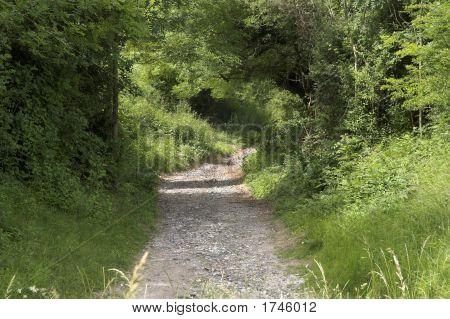 Camino de Downland
