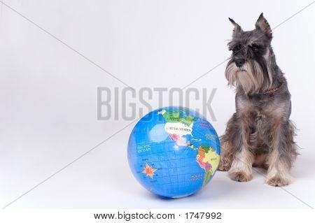 Dog And The Globe