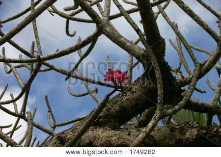 Red Bloom In Tree
