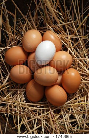 Brown Eggs With White Egg 29