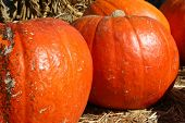 stock photo of cornicopia  - Pumpkin Patch Goodies - JPG