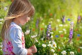 picture of beautiful flower  - Little girl in flower field - JPG