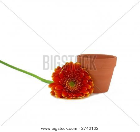Orange Marigold And Terra Cotta Flowerpot
