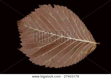 Fallen Brown Autumn Leaves On A Black Background